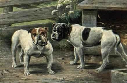 olde english bulldog in san antonio tx for adp