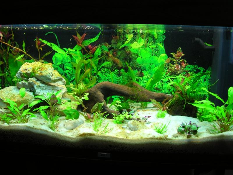 Perdue dans le monde aquatique for Gravier aquarium