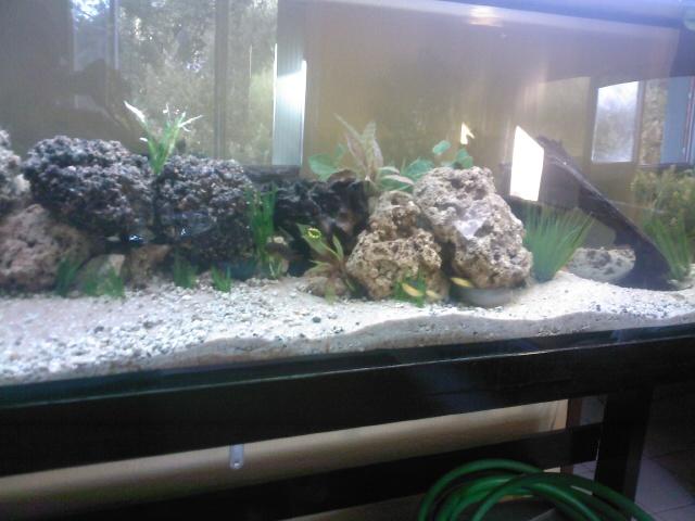 mon aquarium de 600 litres cichlidé africain