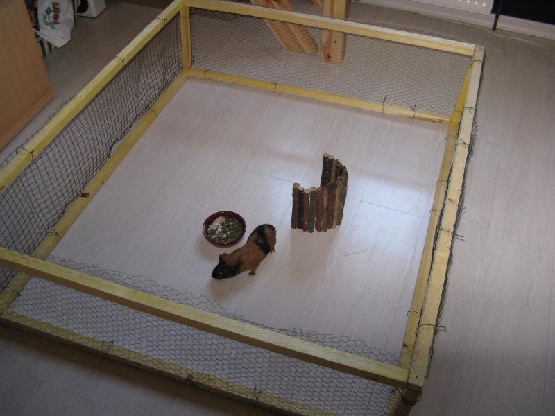 enclos pour mon cochon d 39 inde. Black Bedroom Furniture Sets. Home Design Ideas